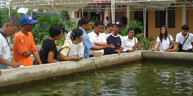 Tilapia Culture Seminar   Tilapia Farming Skills Training Held The Official  Website Of The